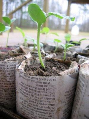 Earth Day or Gardening Themed Kindergarten Lesson Plan