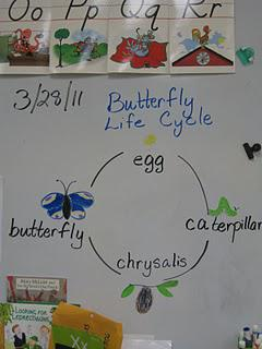 Eric Carle kindergarten thematic unit