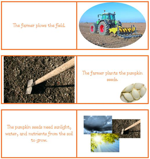 pumpkin life cycle example writing project