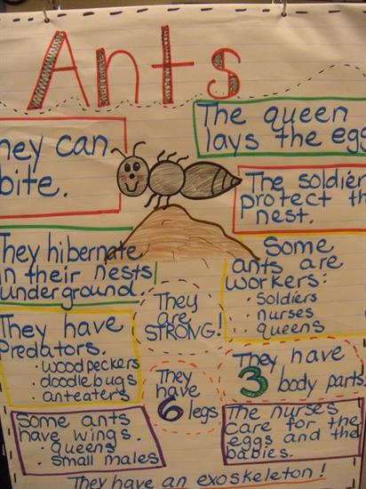 Anchor Chart - All About Ants