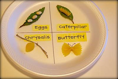 Science Butterfly Life Cycle Preschool Lesson Plan